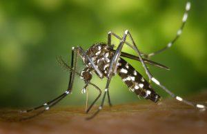 Zika Virus Victims