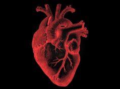 Gut Bacteria Harms Heart!