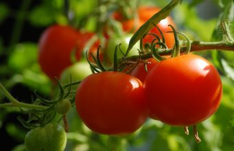 'DNA thinking' Lycopene beats Prostrate Cancer!