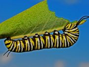 """""""we are but one huge insect!"""" - Learn Lectins!"""