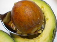 Avocado Seed Fiber With Cruciferous Detox Helps Fasting!