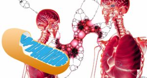 Gigantic Mitochondrial Health Trends Uncovered